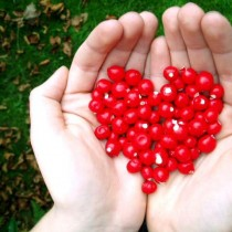 sumber gambar :  http://www.salamdakwah.com/uploads/dirimg_artikel/mib_201305241521038487_heart_you_berry_much_by_rainbowlullaby.jpg